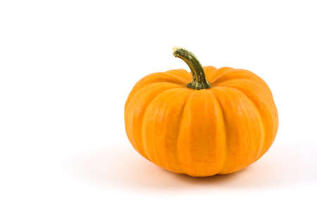 Miniature pumpkin on white background with copy space