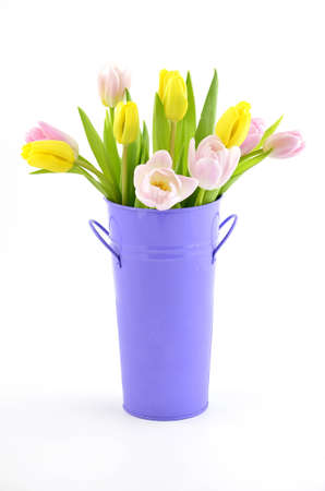 Pink and yellow tulips in purple metal bucket on white background in vertical format Stock Photo