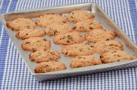 Hot baked oatmeal and raisin cookies on cookie sheet with checked cloth background