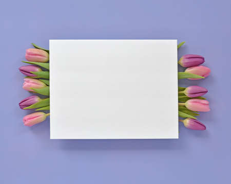 Fresh cut pink and purple tulips on mauve background in horizontal format in flat lay composition. White card for text.