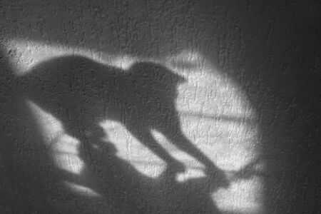 A shadow cat plays with the mouse. Reflection of a cat on the wall.