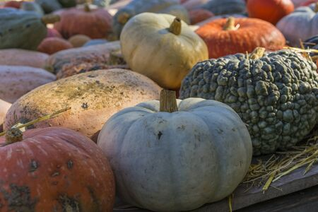Lots of colorful pumpkins laid out in the row. Colored pumpkin as background, wallpaper. Stock fotó