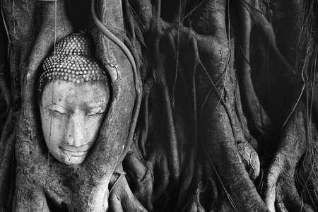 cabeza de buda: Buda cabeza en el �rbol