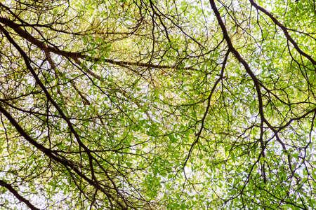 viewfinderchallenge3: tree top