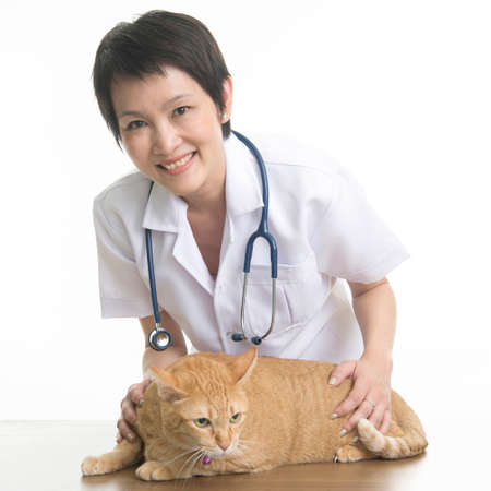 mujer bonita: veterinario mujer bonita con el gato