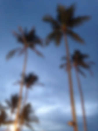 caribbean climate: blur coconut tree with blue sky Stock Photo