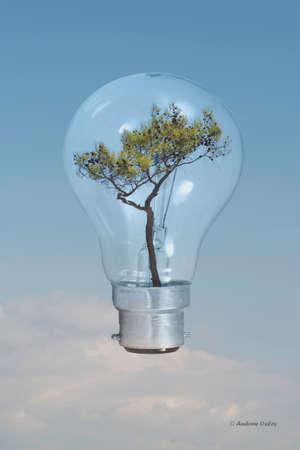 growing inside: Tree shown growing inside an