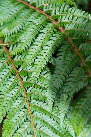fronds: Fresh green fern fronds, close up. Stock Photo