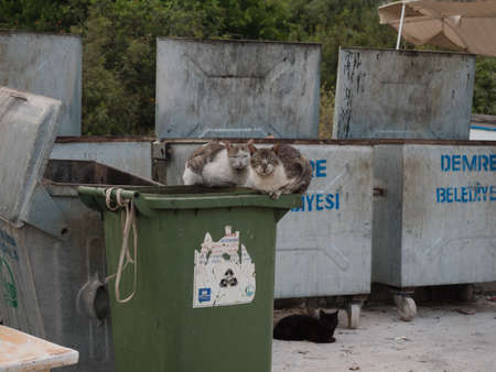 feral: Feral cats on waste bins in Southern Turkey Stock Photo