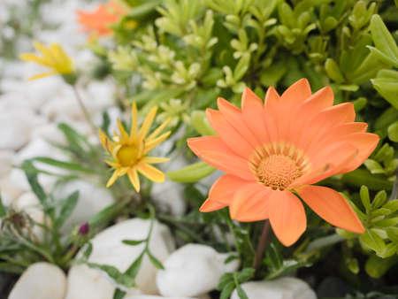 mediteranean: Beautiful mediteranean daisy flowers