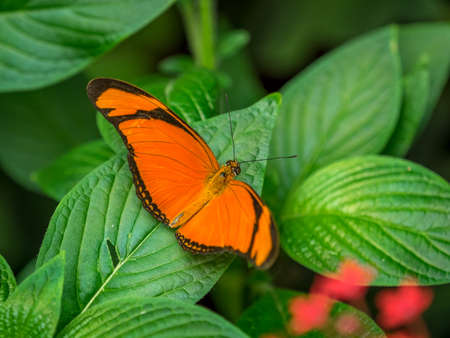 Butterfly resting on leaf, macro. Stock Photo