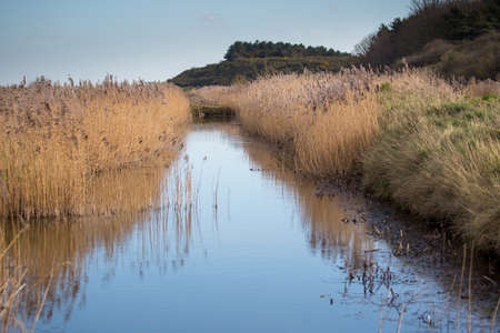 Wetland area with reeds, Norfolk UK