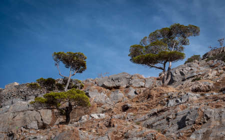 Lone mountain tree, seen on mountain top in NE Crete, Greece. 스톡 콘텐츠