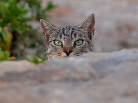Cat peering at camera over  a wall