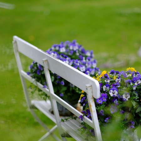 garden patio: Old garden bench