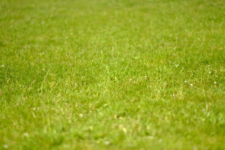 mardi grass: Green grass background