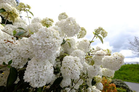 White blooming Stock Photo