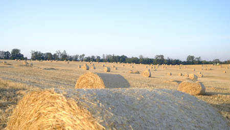 straw bale in focus