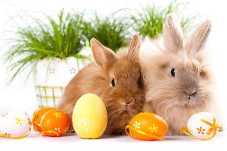 cute bunnies with easter eggs Archivio Fotografico