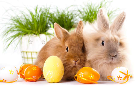 cute bunnies with easter eggs Stock Photo