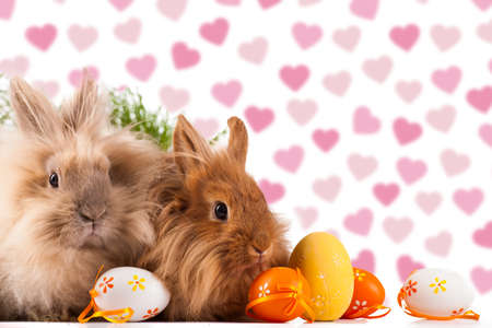 cute bunnies with easter eggs photo