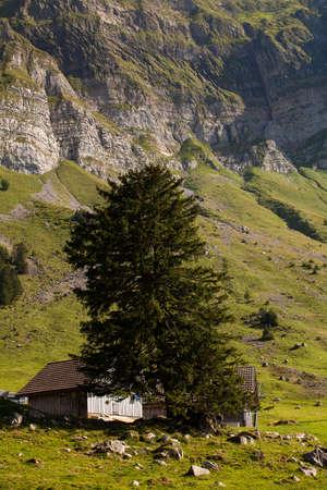 foothills: swiss alpes foothills