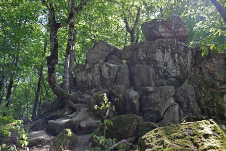 megaliths: Devils Finger. The rock damaged by explosion in the woods of Kuban.