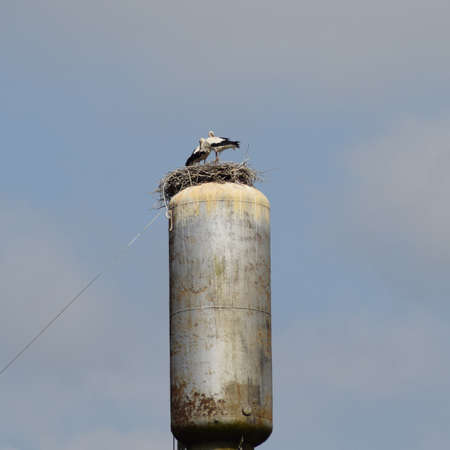 water tower: Stork on a roof of a water tower. Stork nest.