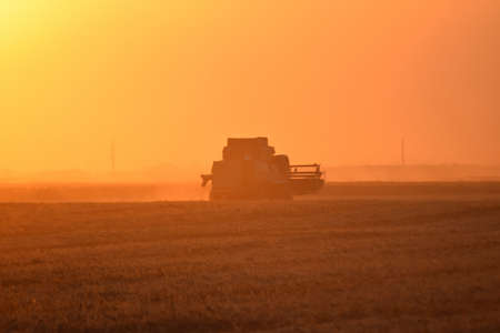 impeller: Harvesting by combines at sunset. Agricultural machinery in operation.