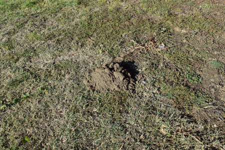 hillock: Hillock of the earth dug by a mole. Activity of underground animals.
