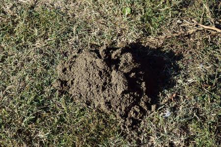 molehill: Hillock of the earth dug by a mole. Activity of underground animals.