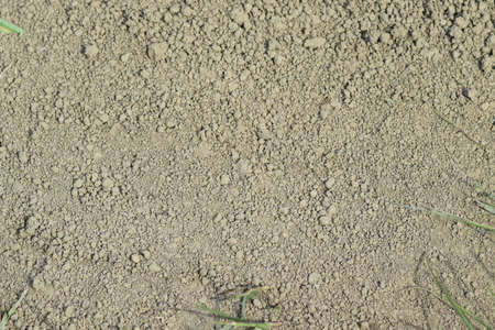 Background from the dry earth. The soil on a dirt road. Stock Photo - 50797494