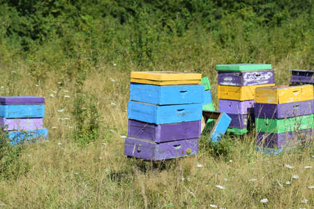 apiary: Colourful beehives. Small apiary in the foothills. Stock Photo