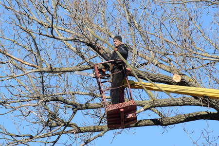 service lift: Pruning trees using a lift-arm. Chainsaw Cutting unnecessary branches of the tree. Putting in order of parks and gardens. Stock Photo