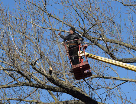 log basket: Pruning trees using a lift-arm. Chainsaw Cutting unnecessary branches of the tree. Putting in order of parks and gardens. Stock Photo