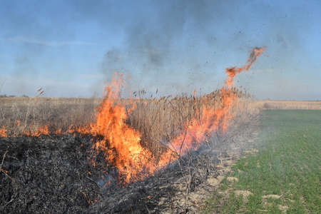 fervor: Burning dry grass and reeds. Cleaning the fields and ditches of the thickets of dry grass.
