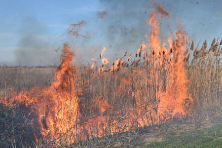 swelter: Burning dry grass and reeds. Cleaning the fields and ditches of the thickets of dry grass.