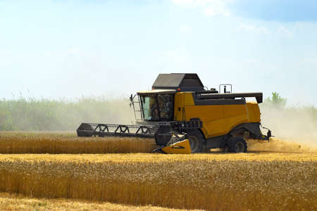 maquinaria: Kombain recoge en la cosecha de trigo. maquinaria agrícola en el campo. cosecha de granos. Foto de archivo