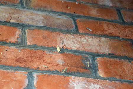 lepidopteran: Other moths on a brick wall. The flying insects to the light bulb. Stock Photo