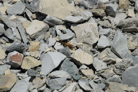 recently: Wasp sitting on the rubble. Recently released from hibernation wasp basking in the sun.