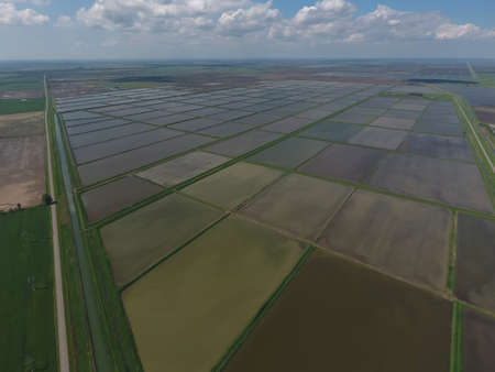 agronomic: Flooded rice paddies. Agronomic methods of growing rice in the fields. Flooding the fields with water in which rice sown. View from above.