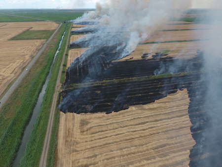 swelter: Burning straw in the fields of wheat after harvesting. The pollution of the atmosphere with smoke.