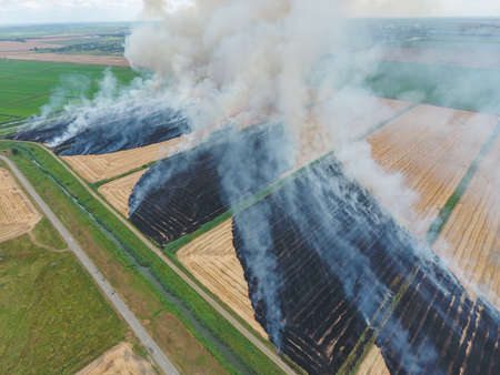 leidenschaft: Burning straw in the fields of wheat after harvesting. The pollution of the atmosphere with smoke.