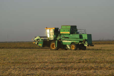 winnowing: Soy harvesting by combines in the field. Agricultural machinery in operation.