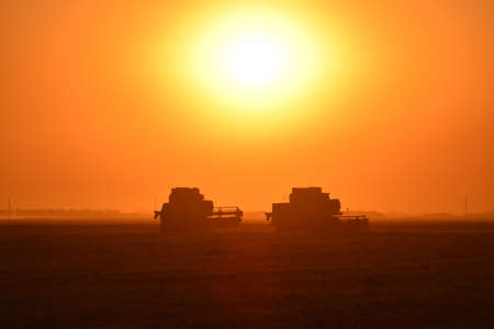 agricultural machinery: Harvesting by combines at sunset. Agricultural machinery in operation.