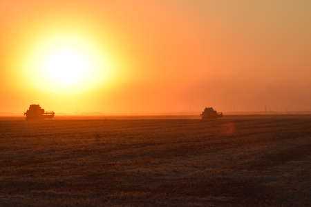 combines: Harvesting by combines at sunset. Agricultural machinery in operation.