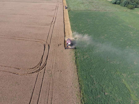 combines: Cleaning wheat harvester. Ripe wheat harvester mowed and straw easily sprayed behind him.