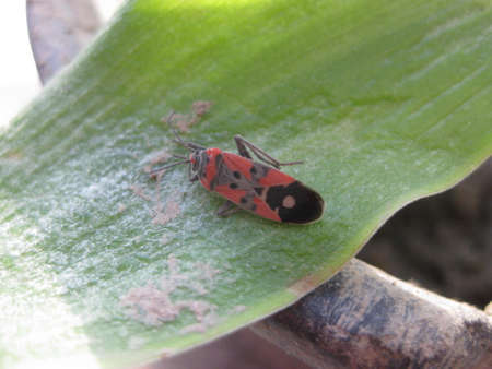 The image of red bugs in a native habitat. Stock Photo