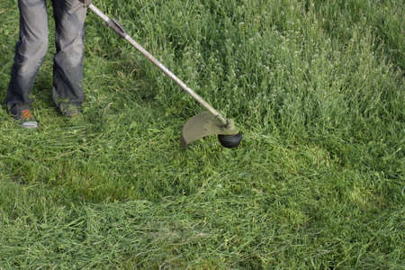 trimmer: Mowing green grass using a fishing line trimmer. Application trimmers.