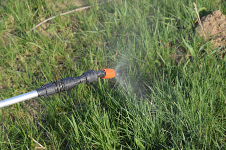 fine tip: Spraying herbicide from the nozzle of the sprayer manual. Devices for processing plants in the garden. Stock Photo
